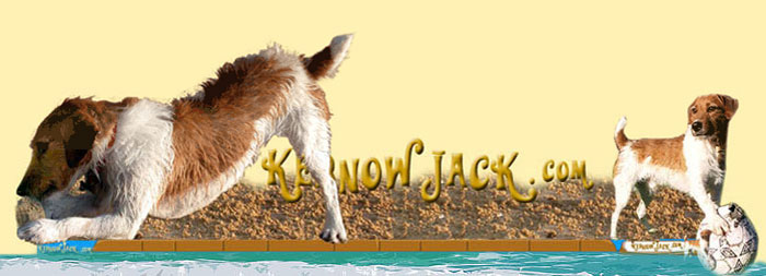 Kernow Jack Dog's Fun Place for Kids and Pets