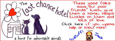 The Last Chance Hotel - a home for unhomeable animals